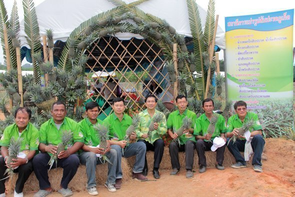 Phuket held Pineapple Tourism Day