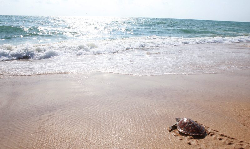 8th Mai Khao Turtle Release Ceremony Takes Place on Songkran Day At JW Marriott Phuket