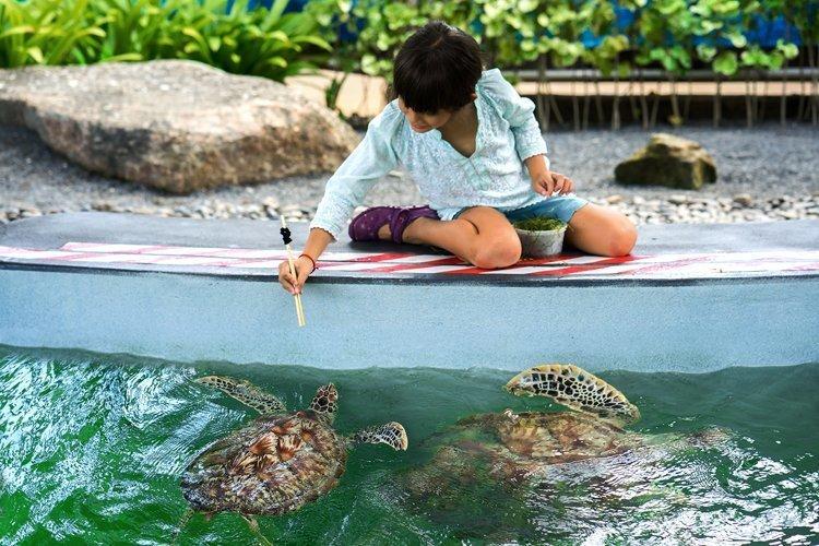 Rise with the Sun, Run for Conservation of Sea Turtles Mai Khao Marine Turtle Foundation Gears Up for The 13th Mai Khao Turtle Fun Run Across The Sea & Mini Marathon 2017