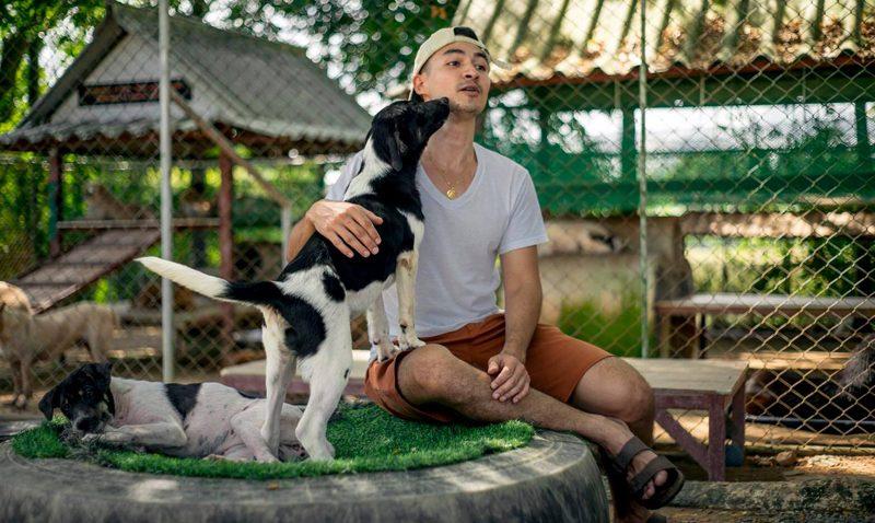 Soi Dog Sanctuary Set to Open on Saturdays