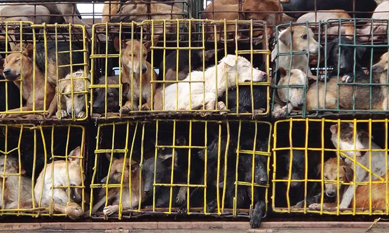 Soi Dog Congratulates Hanoi's People's Committee Ban on Dog and Cat Meat Trade
