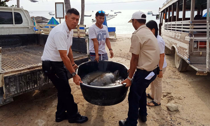 Sea turtle rescued at The Racha