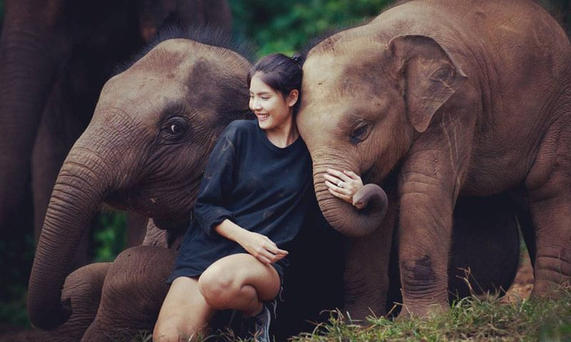 Visit an Elephant Nature Park in Chiang Mai