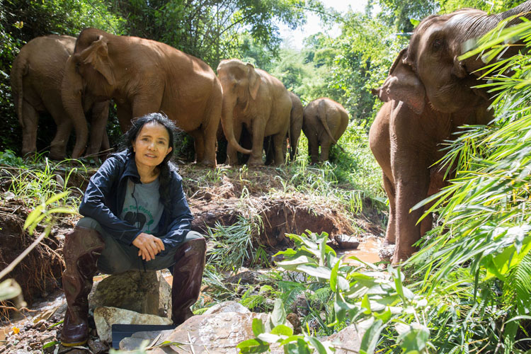 Potential Catastrophe Facing Thailand's Elephant Camps As Tourists Disappear Dozens of elephant trekking camps are closing due to lack of income; around 1,000 elephants in danger of starvation